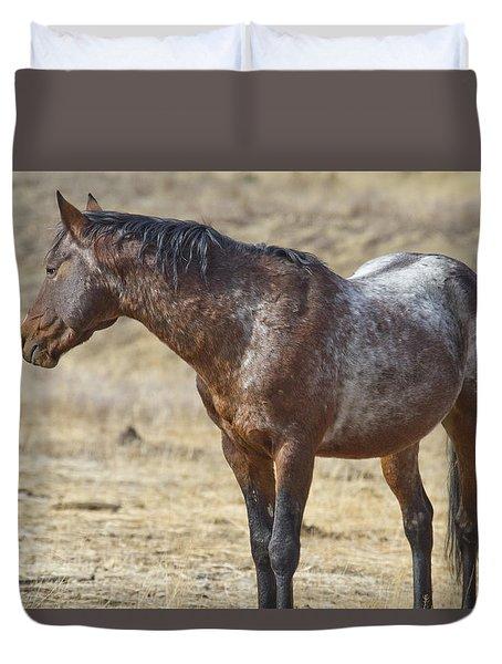 Wild Appaloosa Mustang Stallion Duvet Cover