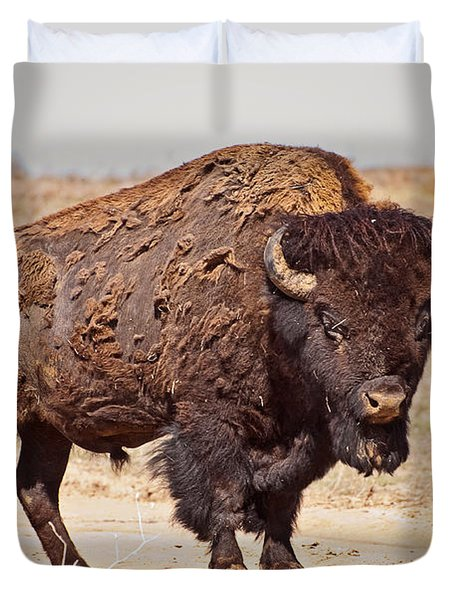 Wild Bison Duvet Cover