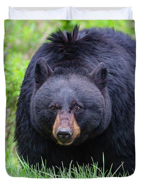 Wild Black Bear Duvet Cover