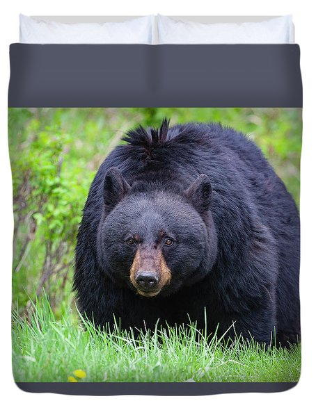 Wild Black Bear Duvet Cover