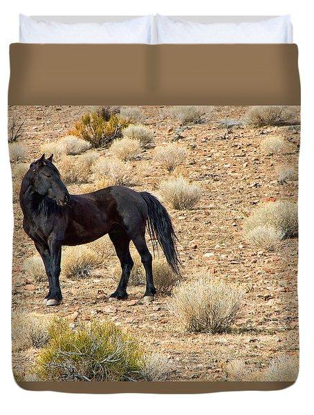 Wild Black Mustang Stallion Duvet Cover