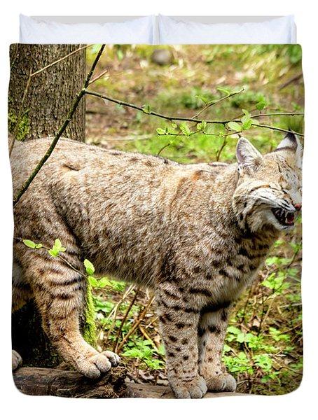 Wild Bobcat In Mountain Setting Duvet Cover