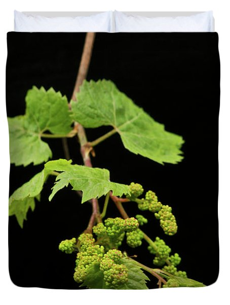 Wild Grapes 1995 Duvet Cover by Michael Peychich