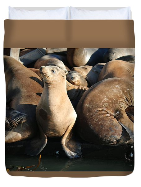 Wild Sea Lions  Duvet Cover