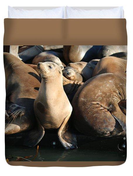 Wild Sea Lions  Duvet Cover