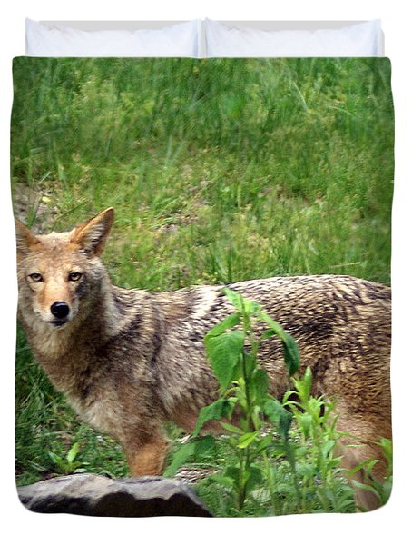 Wiley Coyote Duvet Cover by Marty Koch