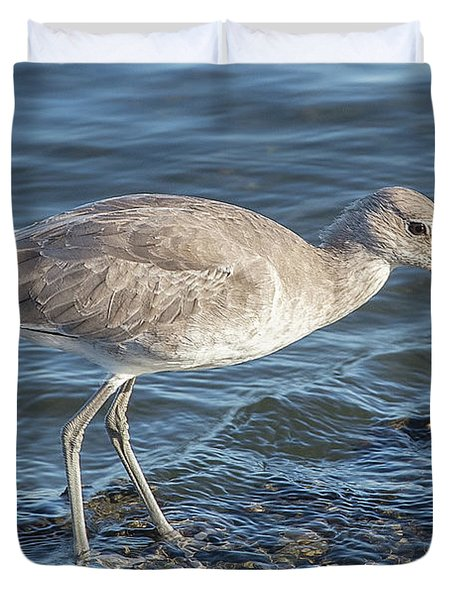 Willet In Winter Plumage Duvet Cover