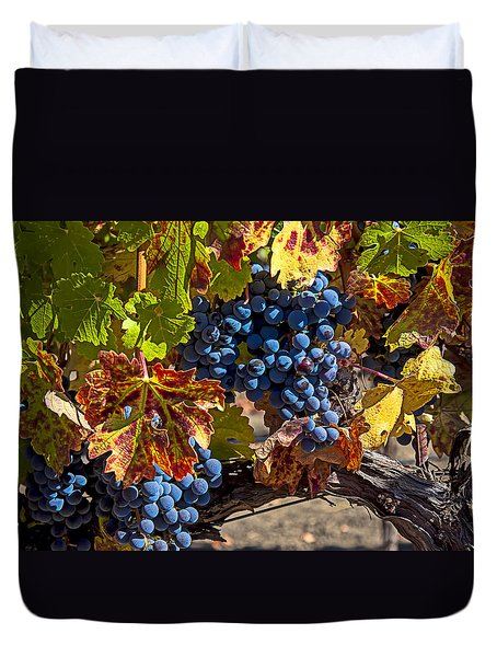 Wine Grapes Napa Valley Duvet Cover by Garry Gay