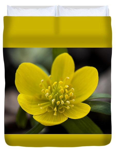 Winter Aconite Duvet Cover