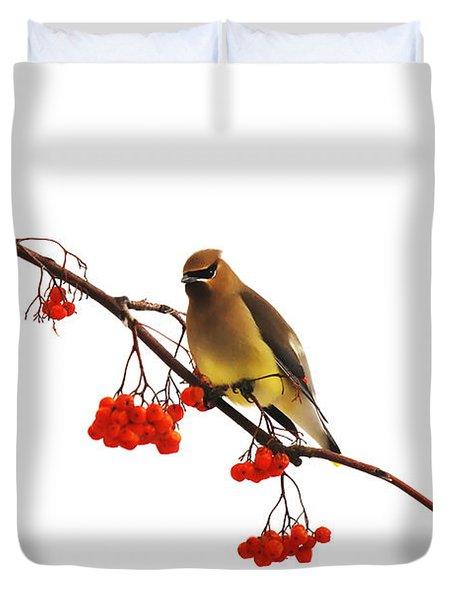 Winter Birds - Waxwing  Duvet Cover