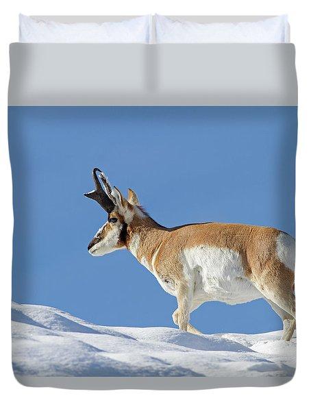Winter Pronghorn Buck Duvet Cover