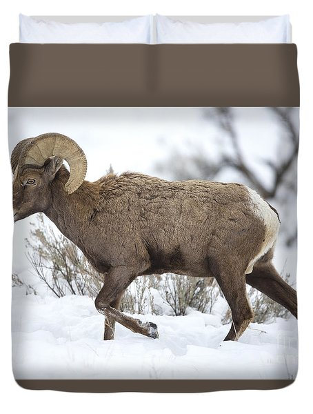 Winter Ram Duvet Cover