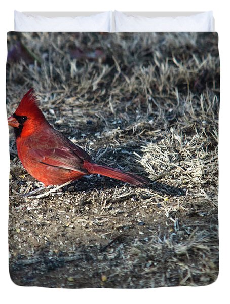 Winter Redbird Duvet Cover by Douglas Barnett