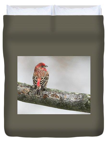 Winter Glance Duvet Cover
