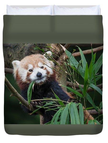 Wizened Red Panda Duvet Cover