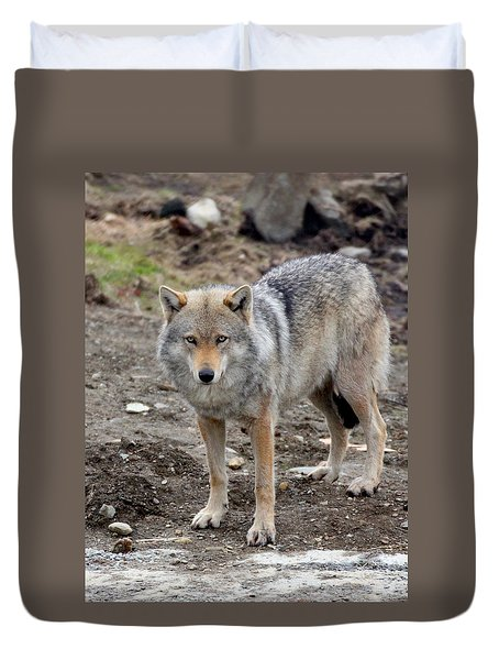 Wolf 2 Norway Duvet Cover