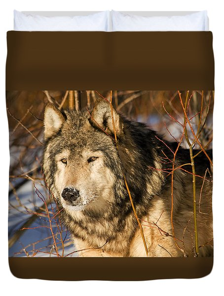 Wolf In Brush Duvet Cover