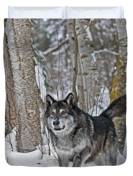 Wolf In Trees Duvet Cover