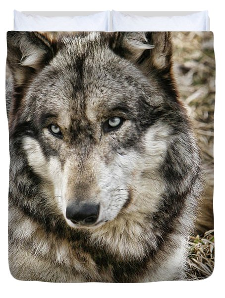 Duvet Cover featuring the photograph Wolf Portrait by Shari Jardina