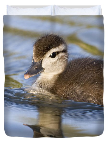 Wood Duck Duckling Swimming Santa Cruz Duvet Cover by Sebastian Kennerknecht
