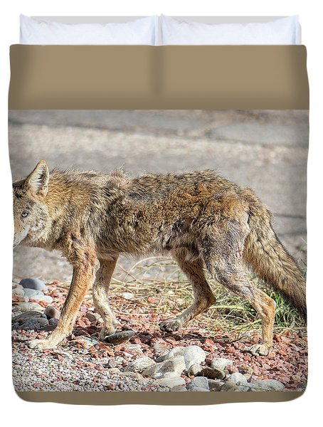 Duvet Cover featuring the photograph Worn Down Coyote by Dan McManus