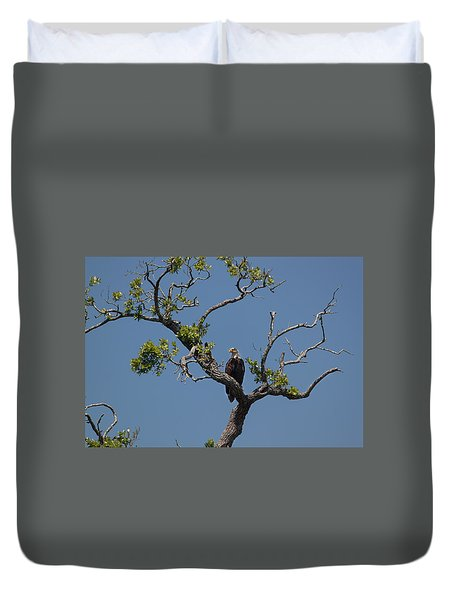 Yawkey Wildlife Reguge - American Bald Eagle Duvet Cover by Suzanne Gaff