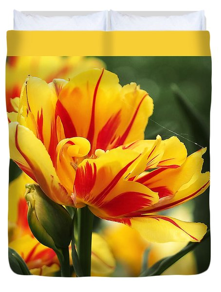 Yellow And Red Triumph Tulips Duvet Cover by Rona Black