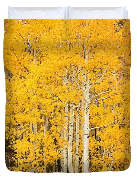 Yellow Aspens Duvet Cover by Ron Dahlquist - Printscapes