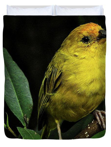 Duvet Cover featuring the photograph Yellow Bird by Pradeep Raja Prints