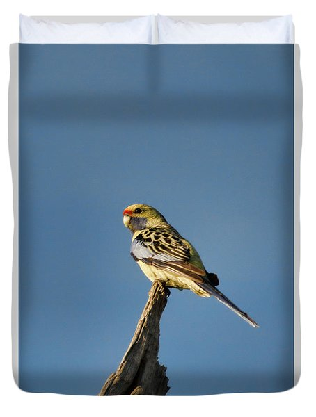 Yellow Crimson Rosella Duvet Cover by Douglas Barnard