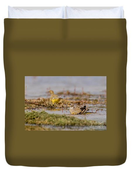 Yellow Crowned Wagtail Juvenile Bath Time Duvet Cover