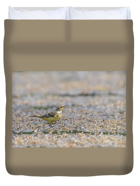 Yellow Crowned Wagtail Juvenile Duvet Cover