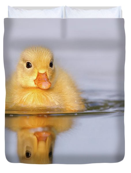 Yellow Duckling In Blue Water Duvet Cover