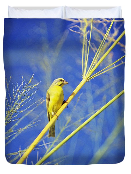 Yellow Fronted Canary Duvet Cover by Bob Abraham - Printscapes