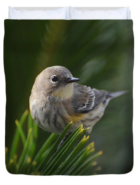 Yellow Rump Warbler Duvet Cover by Debby Pueschel