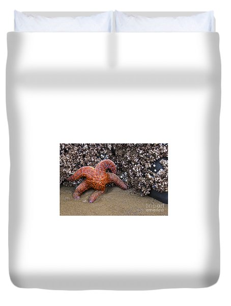 Orange Starfish On Beach #4 Duvet Cover