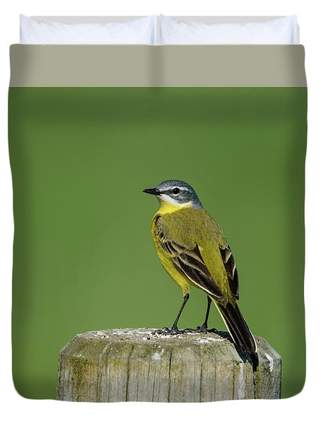 Yellow Wagtail Perching On The Roundpole Duvet Cover