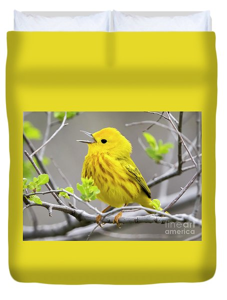 Yellow Warbler  Duvet Cover by Ricky L Jones
