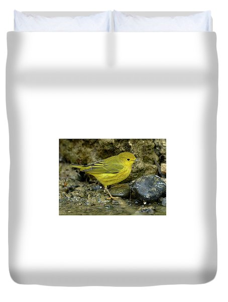 Yellow Warbler Duvet Cover by Doug Herr