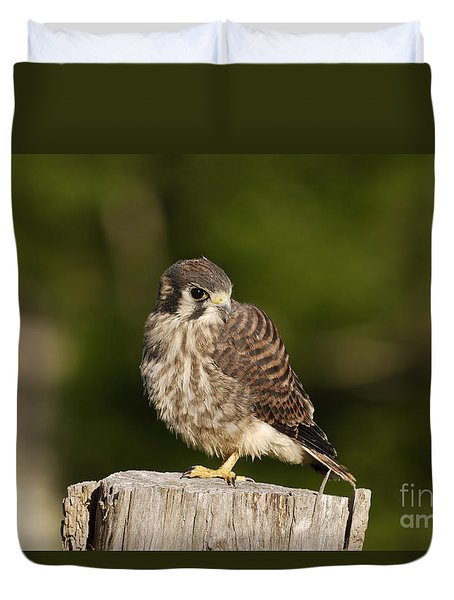 Young American Kestrel Duvet Cover by Randy Bodkins