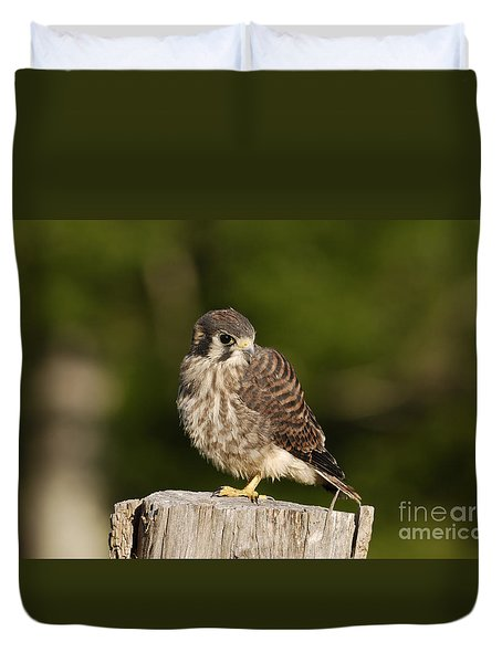 Young American Kestrel Duvet Cover