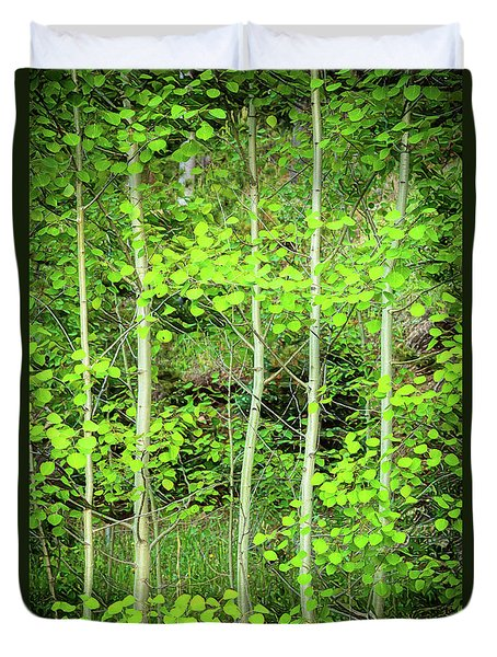 Duvet Cover featuring the photograph Young Aspen Forest Portrait by James BO Insogna