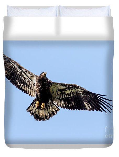 Young Bald Eagle Flight Duvet Cover by Eleanor Abramson