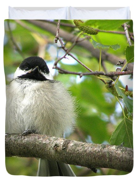 Duvet Cover featuring the photograph Young Black-capped Chickadee by Angie Rea