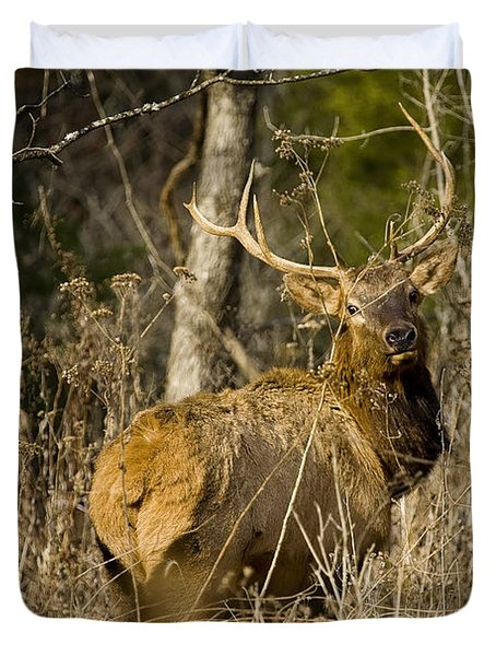 Duvet Cover featuring the photograph Young Bull On A Woodland Trail by Michael Dougherty