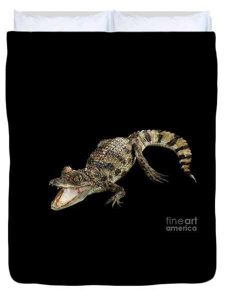 Young Cayman Crocodile, Reptile With Opened Mouth And Waved Tail Isolated On Black Background In Top Duvet Cover by Sergey Taran