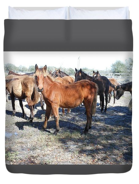 Young Cracker Horses Duvet Cover by Kay Gilley