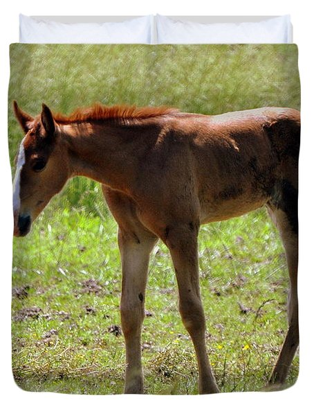 Young Foal Duvet Cover by Marty Koch