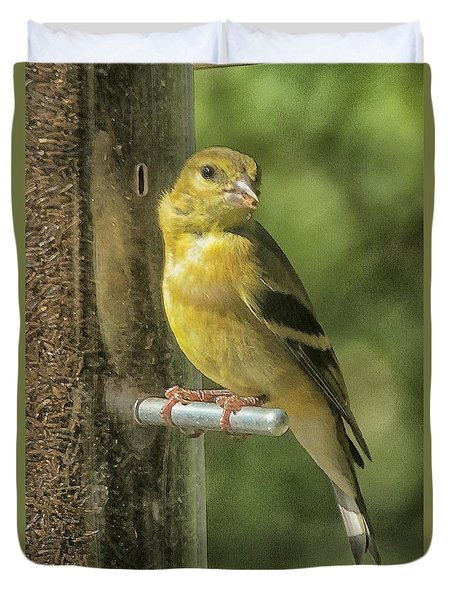 Young Goldfinch Duvet Cover by Constantine Gregory