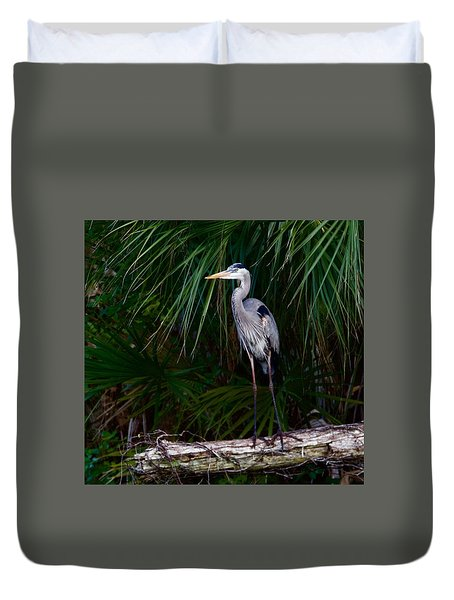 Young Great Blue Heron Duvet Cover